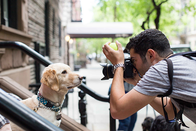 The-Dogist-7