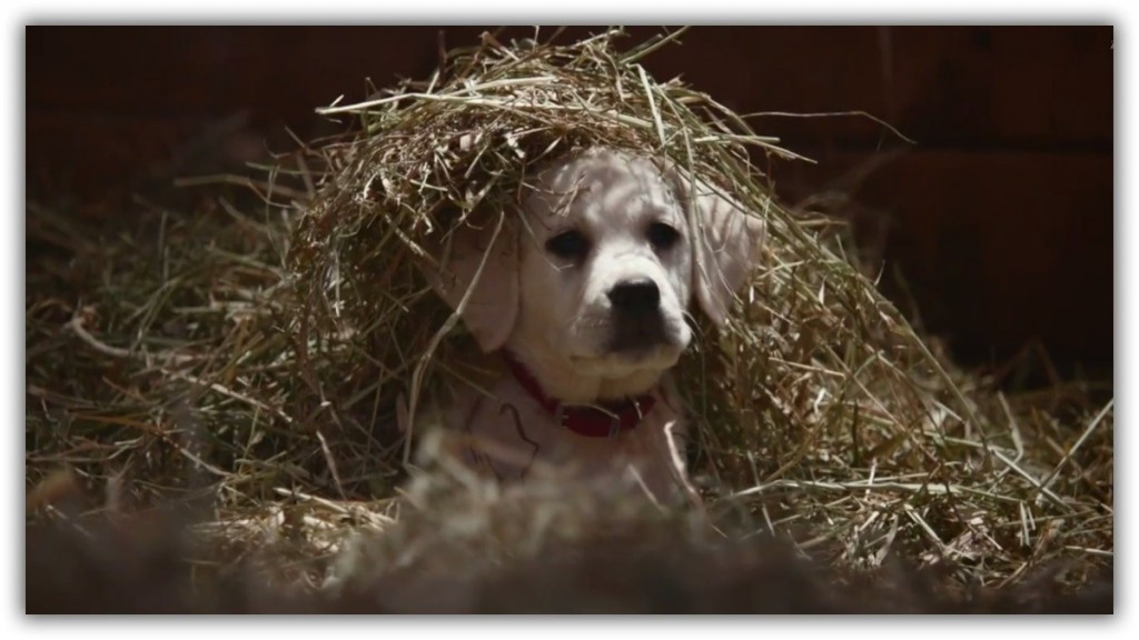 Budweiser-Lost-Puppy-Super-Bowl-2015-Ad-Shows-What-Real-Friendship-Is-Like-Video-471522-2