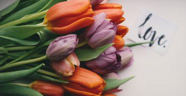 gekleurde-tulpen