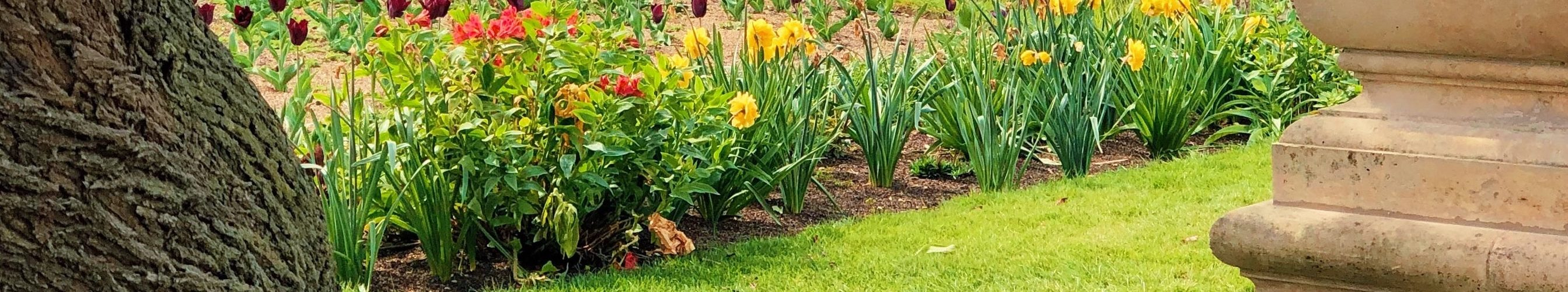 tuin-bloemen