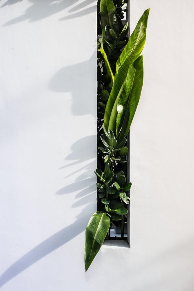 tuin-modern