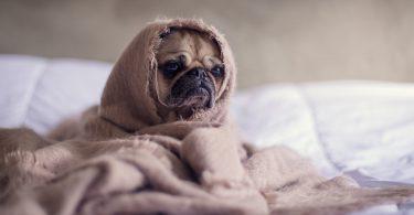 hond-onder-dekentje