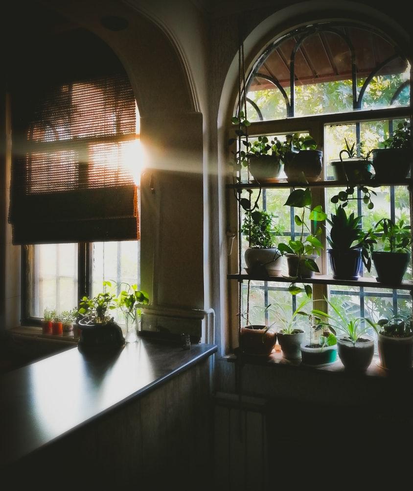 planten-raam