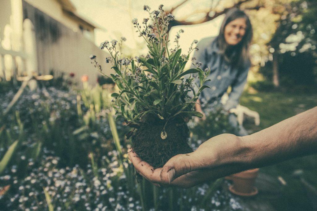 tuinieren-planten
