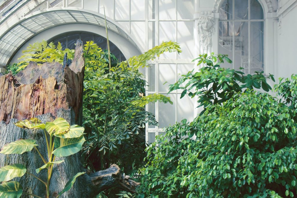 tuinkamer-planten