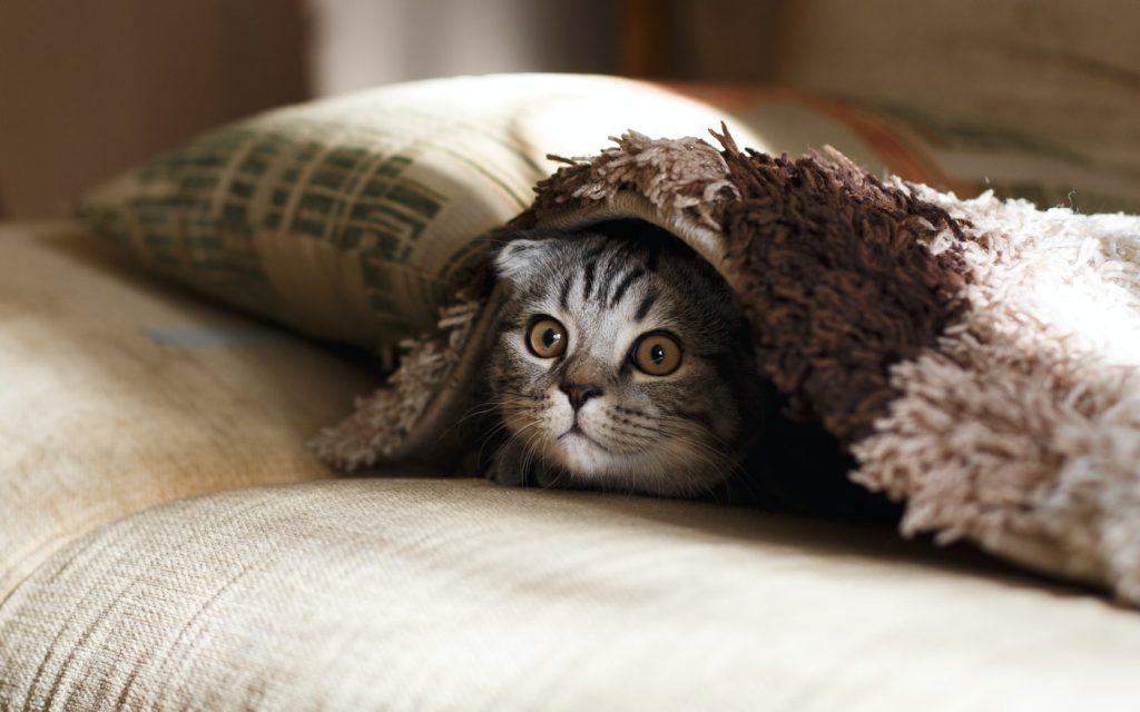 kat-dekens