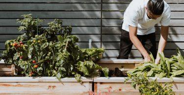 tuin-onderhouden